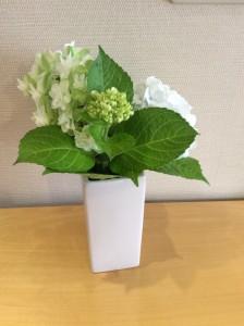弊社の花壇に咲いている紫陽花です。毎年可愛い花を咲かせてくれます。
